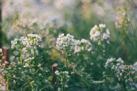 free stock photo of beautiful flowers flower garden flowers