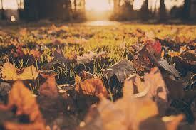 free stock photo of autumn fall foliage