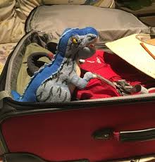 Texas traveling suitcase images The adventures of archie the traveling t rex big bend national jpg
