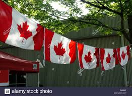 Red Flag Day Row Of Canadian Red Maple Leaf Flags At Canada Day Celebrations On