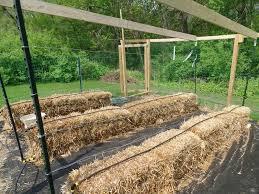 straw bale garden club