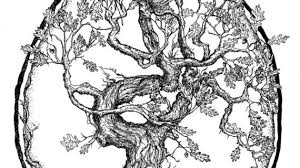 drawings of oak trees ideas on tree tattoos tree