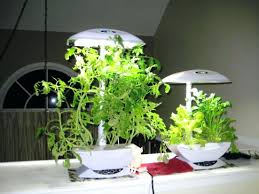 plant grow lights lowes grow ls for indoor plants th s light bulbs lowes lights walmart