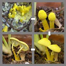 eliminate mushrooms in your lawn gardening know how