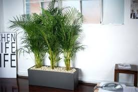 Indoor Plant For Office Desk Best Office Plants Kind Of Feeling Like A Terrarium Kit Is A