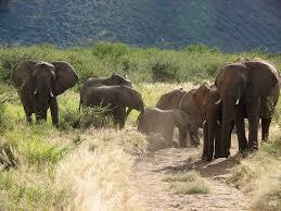 african safari animals south african safari holiday south african wildlife madikwe
