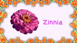 All Types Of Flowers List - 100 beautiful flowers and names 100 photos of flowers and