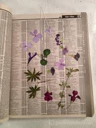 Drying Flowers In Books - handmade pressed flower gifts from your backyard hearth u0026 vine