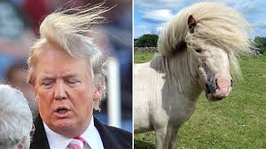 Who Wore It Better Meme - 13 hilarious donald trump s hairs look like funny memes funny