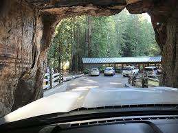 Tree Chandelier Chandelier Drive Through Tree Leggett Ca Top Tips Before You