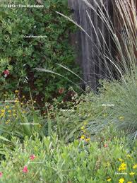 native plants to texas texas native plant week garden vignettes my gardener says u2026