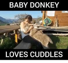 Funny Donkey Memes - baby donkey loves cudd less donkey meme on esmemes com