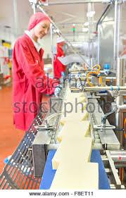 food processing quality control technician quality control workers checking cheese on production line in