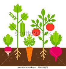 pot plant clipart vegetable garden pencil and in color pot plant