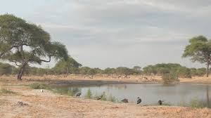 african safari animals close up safari animals gathering around water in dry season in