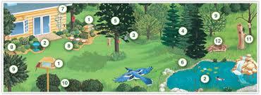 Backyard Wild Birds Birdscaping Your Backyard