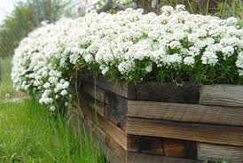 white flowers in wooden planter picture free photograph photos