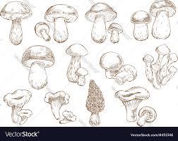 edible mushrooms sketch drawing icons royalty free vector