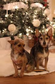 diy flocked christmas tree u2013 senseful style