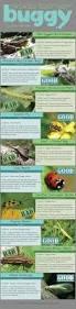 164 best garden bugs good and bad images on pinterest garden