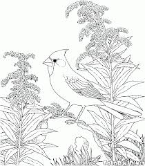 coloring page partridge