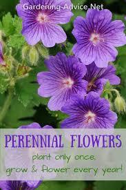 perennial garden plants flower gardening advice for colorful gardens