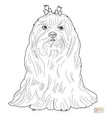 maltese dog coloring free printable coloring pages