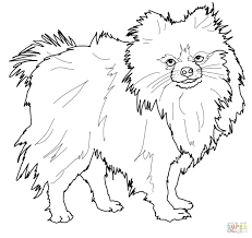 wonder pets coloring pages printable jewelpet dog breed palace