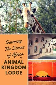 19 best animal kingdom villas dvc images on pinterest villas