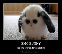 Funny Monday Memes - rabbit ramblings funny bunny monday meme day