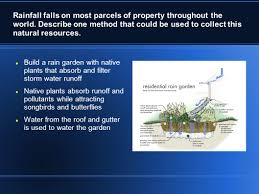 austin native plants green building and sustainable design made by lucas ingalls