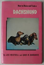 417 best dachshund archives images on pinterest dachshunds