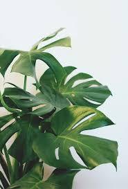 158 best solo show inspo images on pinterest plants gardening