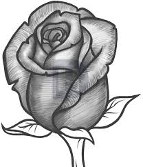 how to draw a rose bud rose bud step by step drawing guide by