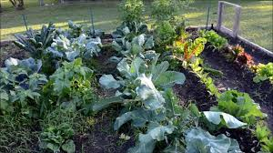 Gardening For Beginners Vegetables by Growing A Fall Heirloom Vegetable Garden 2012 3 Youtube