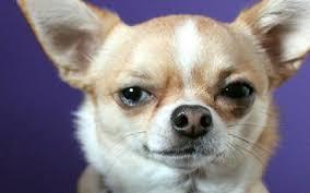 boxer dog upset stomach dog has a lot of gas dog u0027s upset stomach