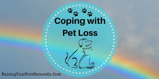 grieving the loss of a pet loss of a pet grieving the loss of a pet understanding pet grief
