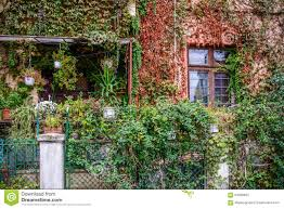 Overgrown Garden Big Building Covered With Overgrown Plants Window And Garden Cov