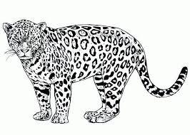 5 images cheetah printable bookmarks color cheetah