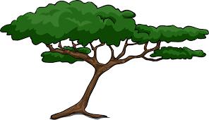shrub clipart acacia tree pencil and in color shrub clipart