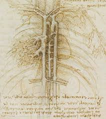 Leonardo Da Vinci Human Anatomy Drawings Ten Drawings By Leonardo Da Vinci Star Of The Renaissance At The