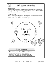 1st grade 2nd grade kindergarten science worksheets life cycles