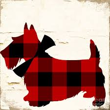 scottish terrier tartan plaid painting by mindy sommers