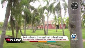 here are the best and worst trees resistant to hurricanes