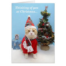 funny cat missing you greeting cards zazzle