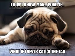 Depressed Pug Meme - depressed pugs