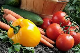 organic vegetable gardening gardening ideas