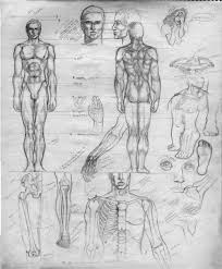 anatomy sketches u2013 a distant soil by colleen doran