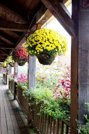 Hanging Plants For Patio Best 25 Fall Mums Ideas On Pinterest Fall Porches Front Porch