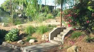 native plants landscaping home kellygrn landscaping san diego